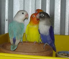 BERBAGI GAMBAR Burung