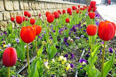 Festival Tulip Turkey 10 Days 2021