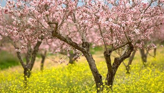 Tu Bishvat: o Ano Novo das Árvores