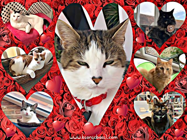 The B Teams Valentine's Selfies ©BionicBasil® Caturday Art