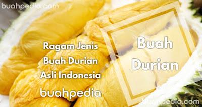 Ragam Jenis Durian