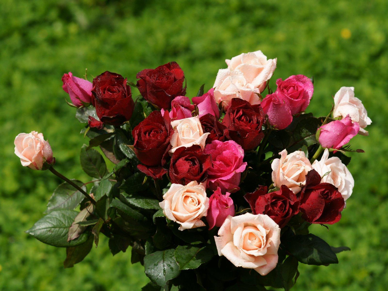 b-wallpaper of rose  Rose Wallpapers