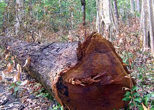 HAGL+Deforestation+01.jpg