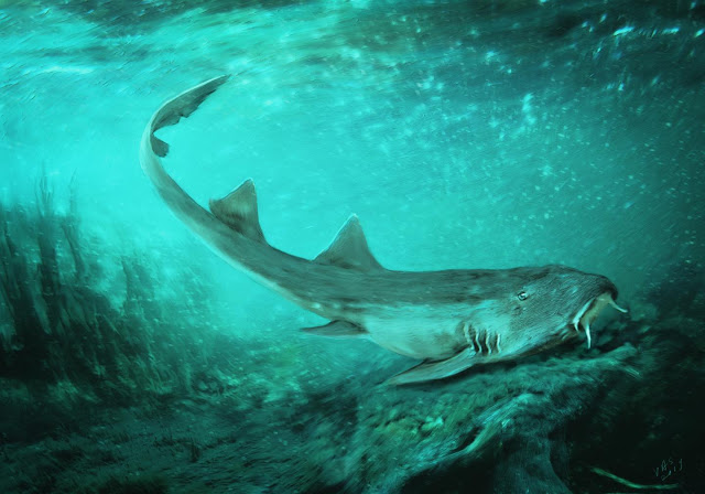 Fossil shark teeth discovered in leftover rock that contained SUE the T. rex