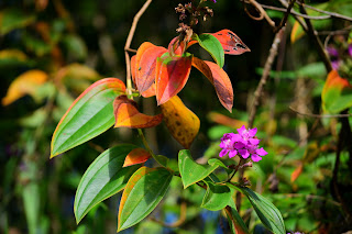 tropical wild flowers in Puriscal