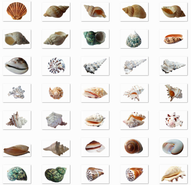 35_png_images_of_shells_and_seashells_preview_by_saltaalavista_blog
