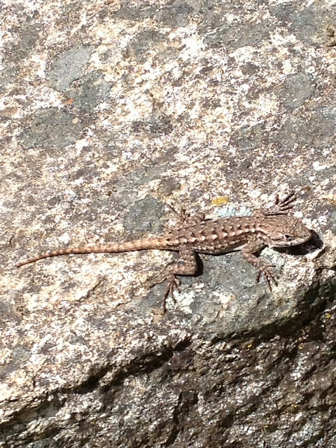 Outdoor Hour Challenge – Using the Reptile and Amphibian ...