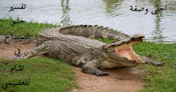 تفسير رؤية التمساح في المنام للعصيمي 2021