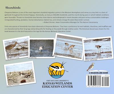 back book cover image of shorebirds