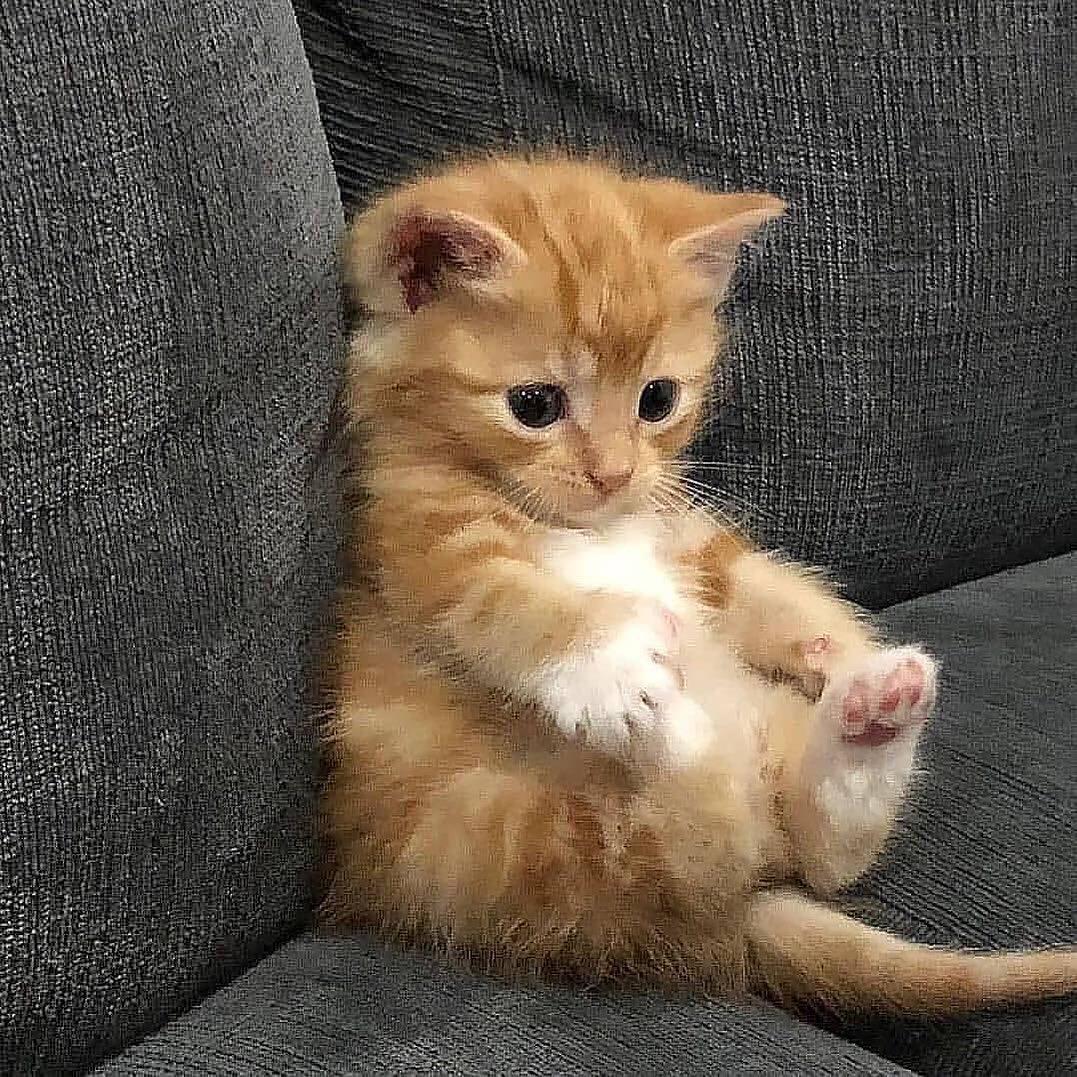 cute cat paws