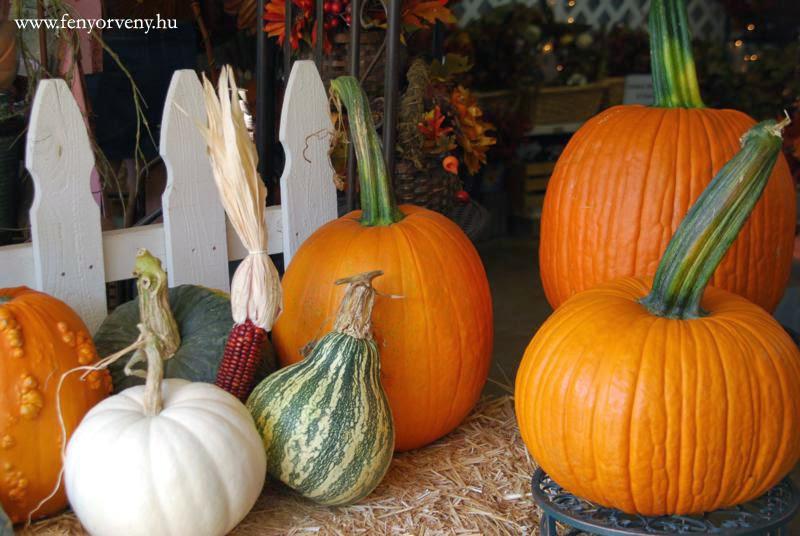 Szépítő sütőtök - a természetes antioxidáns őszre