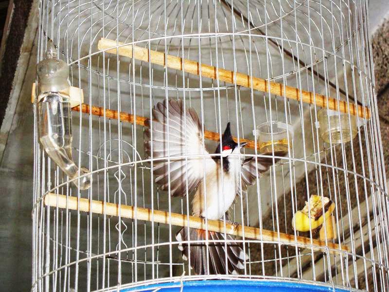 Giá lồng chim, lồng chim biên hòa