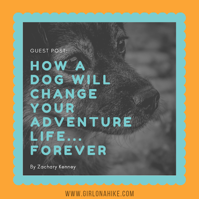 How a Dog Will Change Your Adventure Life... Forever