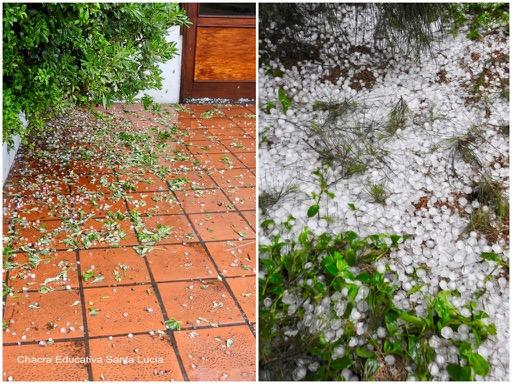 En su caída el granizo quiebra hojas y ramitas - Chacra Educativa Santa Lucía