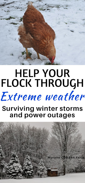 Chicken care in snow storms