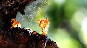 Adapun jenis jenis pohon penghasil resin adalah pohon damar, pohon gaharu, pohon meranti, dan pohon pinus.