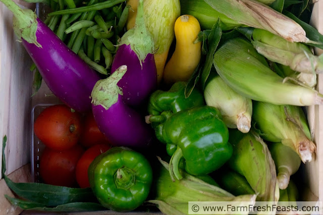 a typical summer CSA farm share box with corn, squash, eggplant, tomatoes, peppers, and beans
