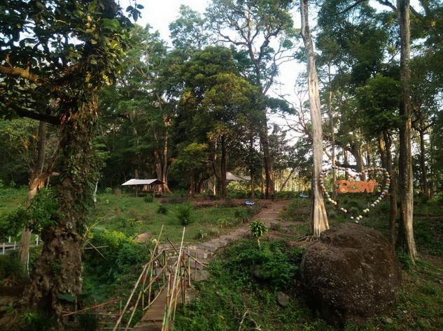 hutan di biskit