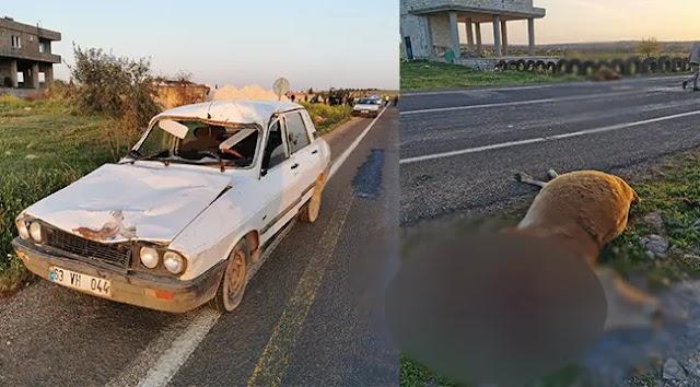 Aynı yolda yine kaza: 2 büyükbaş telef oldu