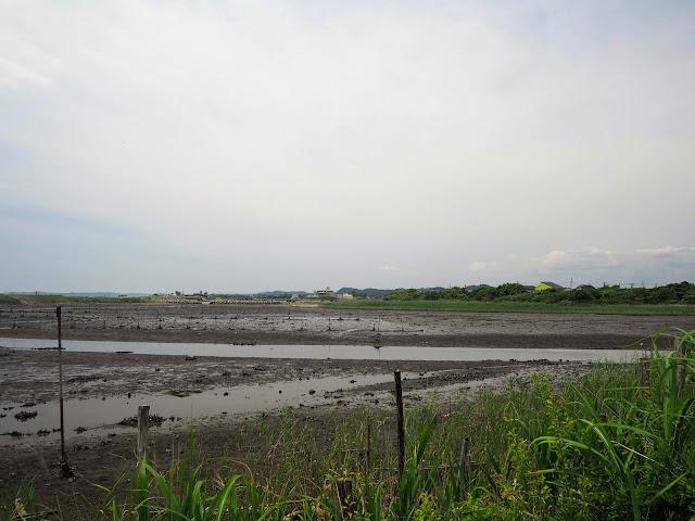 夷隅川河口 干潟
