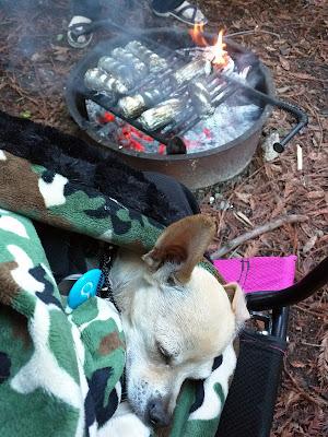 Camping essentials for chihuahuas.