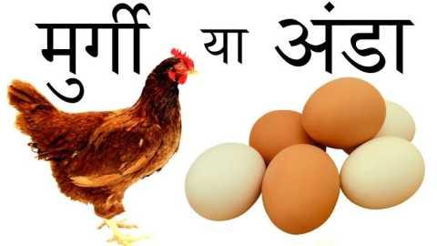 दुनिया मे पहले मुर्गा आया या अंडा जानिये सही जबाब क्या है