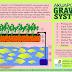 Analisis Budidaya Akuaponik Ikan Nila dan Sayur Tomat Cabai (Bagian II)