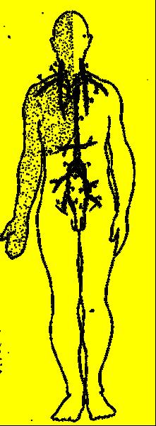 Linfatico Circulando Sistema