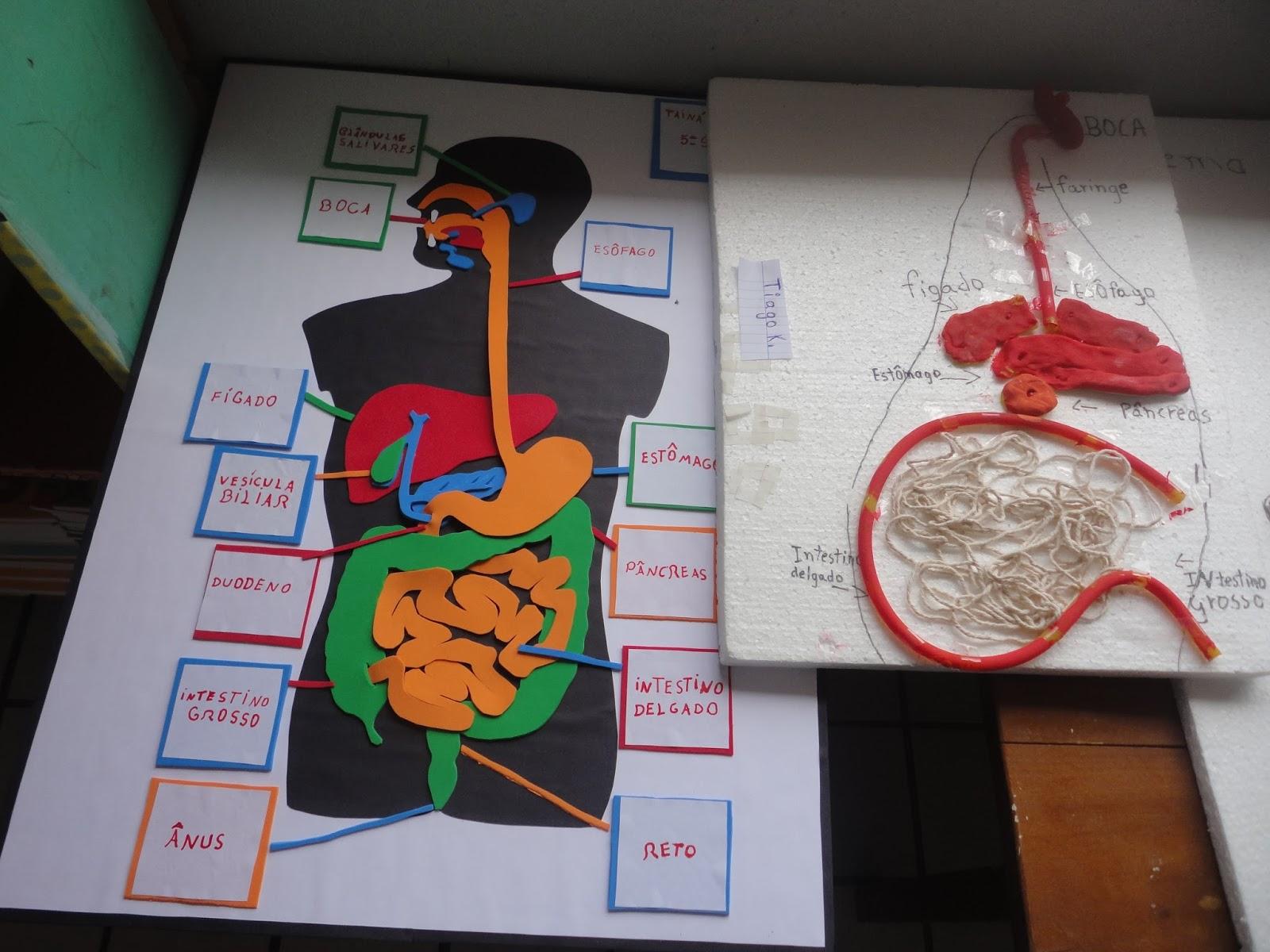 Orgaos do sistema respiratorio yahoo dating 10