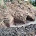 Sebuah Dugaan Bangunan Candi Ditemukan Di Area Persawahan Puthok Ghong  Desa Krecek