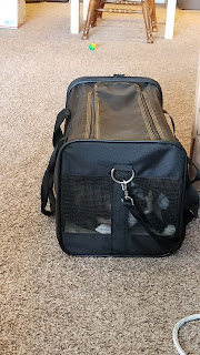 cat in a mesh carrier