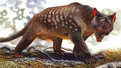 Thylacoleo-Carnifex-era-um-animal-carnívoro-da-australia-que-hoje-esta-extinto