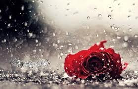 Cerpen Bunga Mawar Merah Berduri Takanta Suara Kenangan