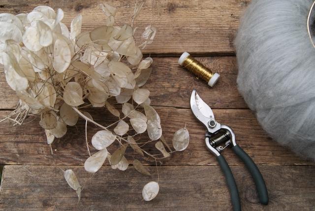 Fruchtschoten des Silberblatts im Herbst