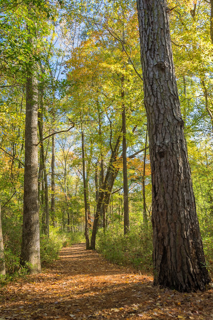 Lakeshore Trail at Tyler State Park