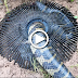 Electric Fan Guard Snake Trap To Catch Huge Snake By a Smart Girl