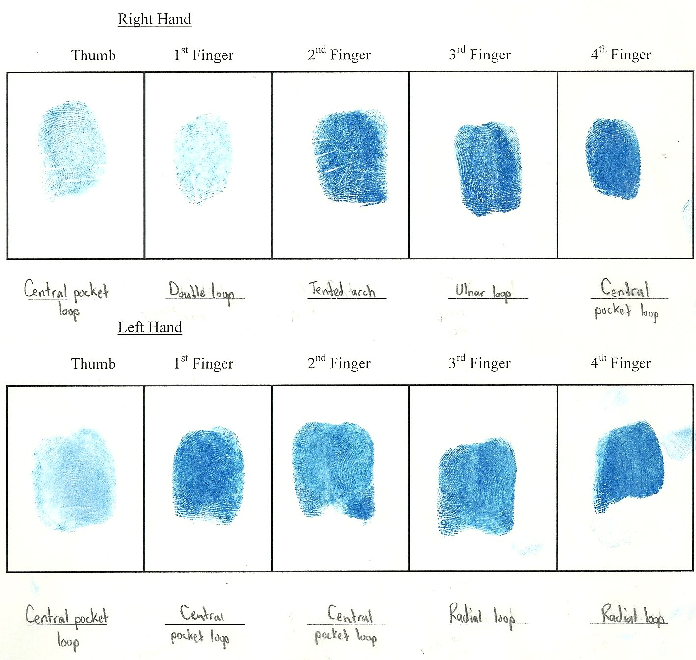 fingerprint paper template - forensics november 2011