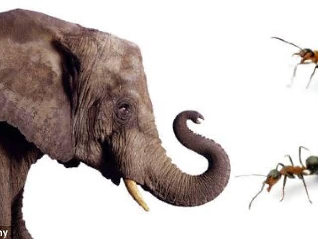 Vinsen Kocu : Gajah Dipelupuk Mata Tak Tampak, Semut Diseberang Lautan Tampak