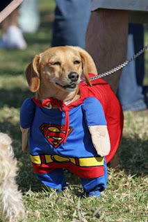 Perro con disfraz de Superman