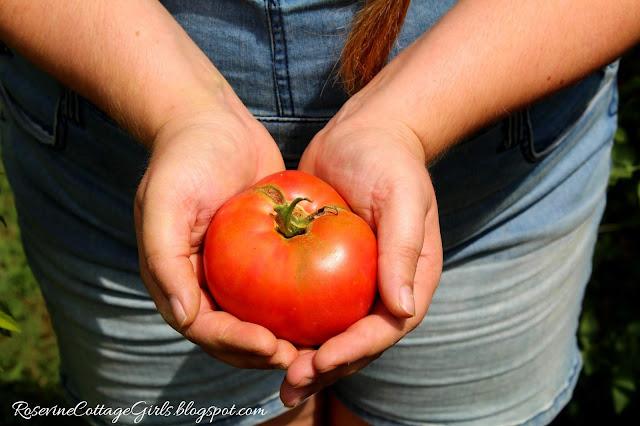 #Garden #GrowYourOwnFood #Chickens #RaisedBeds #OrganicGardening #Tomatoes #Veggies #Overalls #Farmlifestyle #Farm