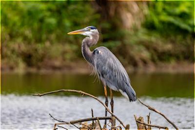 Ramsar Convention - Ramsar Sites in India