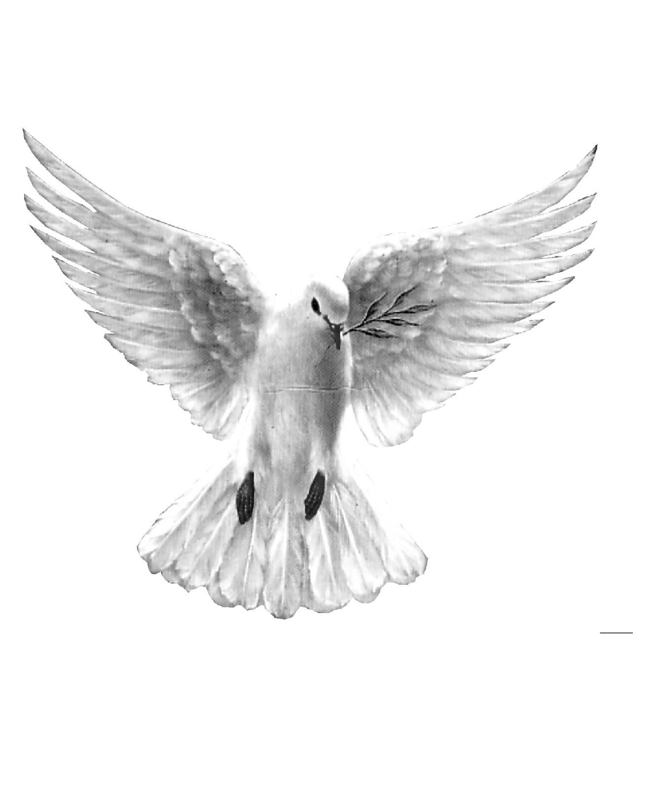 Gambar Ilustrasi Burung Merpati