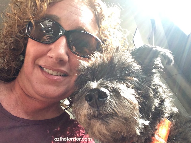 5 terrierific ways to celebrate love your pet day