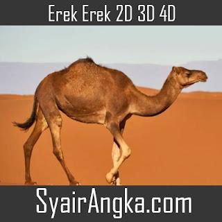 Erek Erek Unta di Buku Mimpi 2D 3D 4D Lengkap