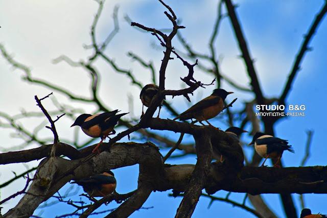 Η φωτογραφία της ημέρας: Το Αγιοπούλι - Ο νομάς του κόσμου