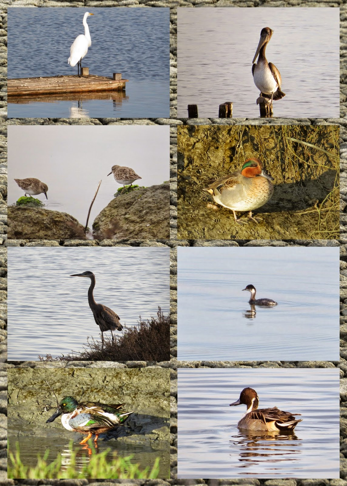 Birds of Bay Marsh Trail