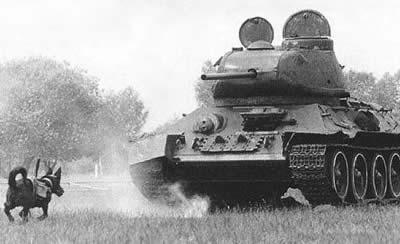 Anti Tank Dog (Soviet)