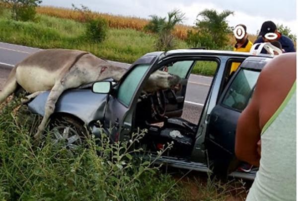 BAHIA: Animal vai parar em cima de carro durante grave acidente