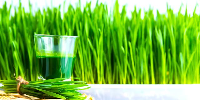 गेंहू के ज्वारे(Wheat Grass) - सेवन विधि एवं औषधीय उपयोग