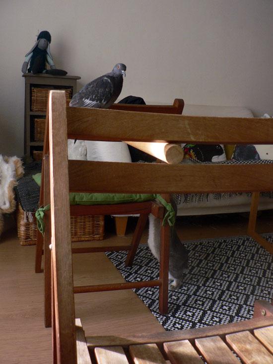 La dure vie du lapin urbain heures de vol ou pas for Chaise qui vole